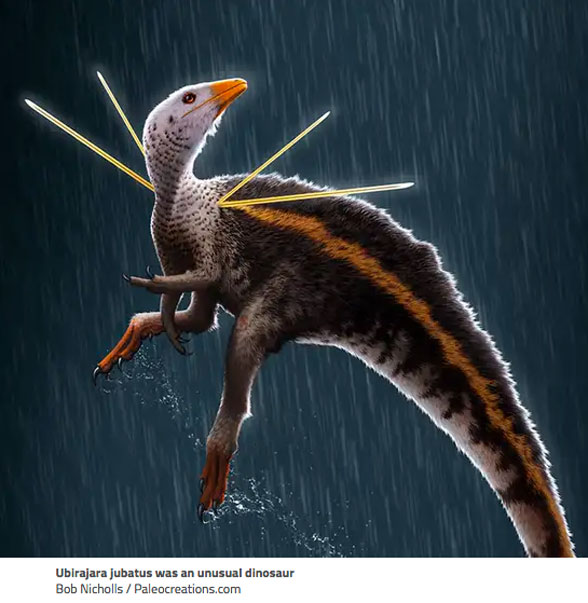 """Figure 1. Ubirajara illustration showing proposed four """"stiff rod-like structures projecting from its shoulders."""""""