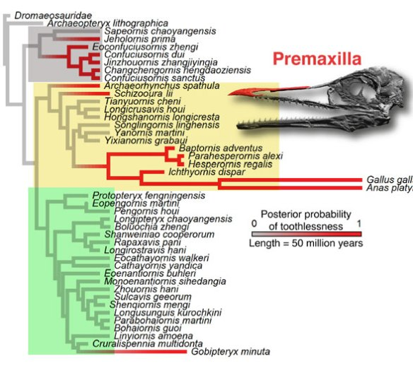 Figure 1. Cladogram from Brocklehurst and Field 2021. Note the paucity of cherry-picked taxa compared to the LRT.