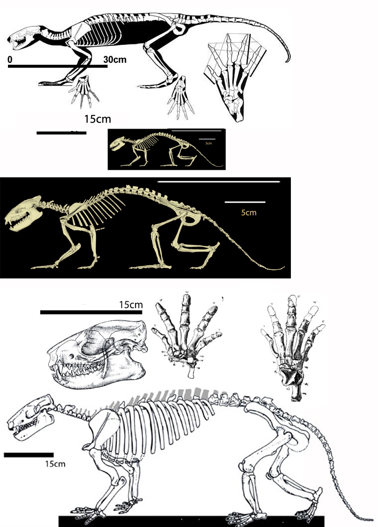 Figure 3. Onychodectes, Alcidedorbignya and Pantolambda are former tree shrews now terrestrial of increasing size in the Early Paleocene.